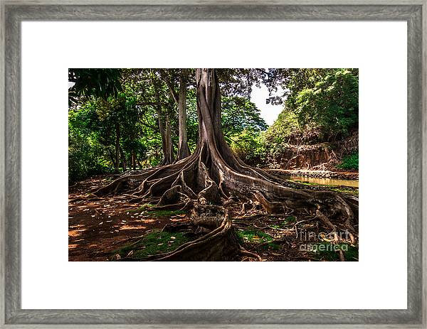 Jurassic Park Tree Framed Print