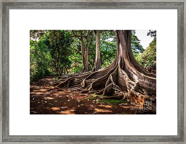 Jurassic Park Tree Group Framed Print