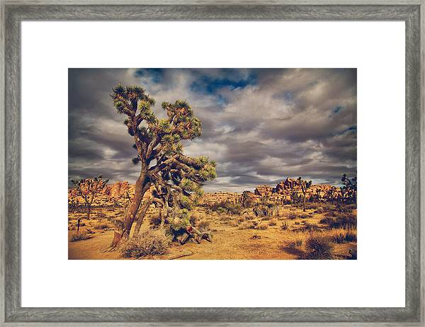 Just A Touch Of Madness Framed Print