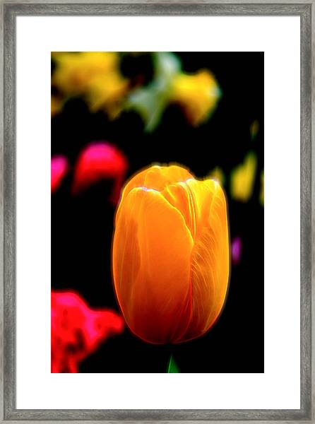 Framed Print featuring the photograph Just A Tulip by Kevin McClish