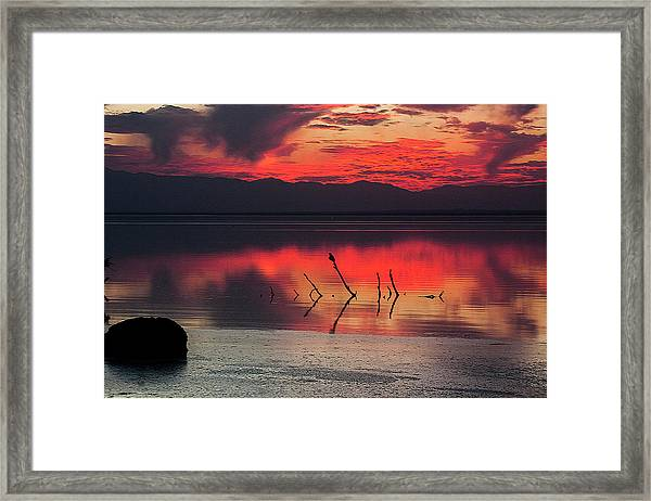 Just Beneath The Surface Framed Print
