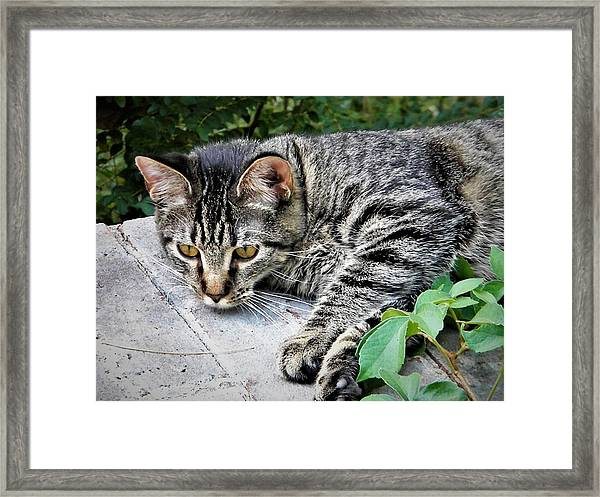 Just Call Him Sir Framed Print