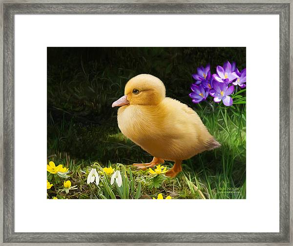 Just Ducky Framed Print by Bob Nolin
