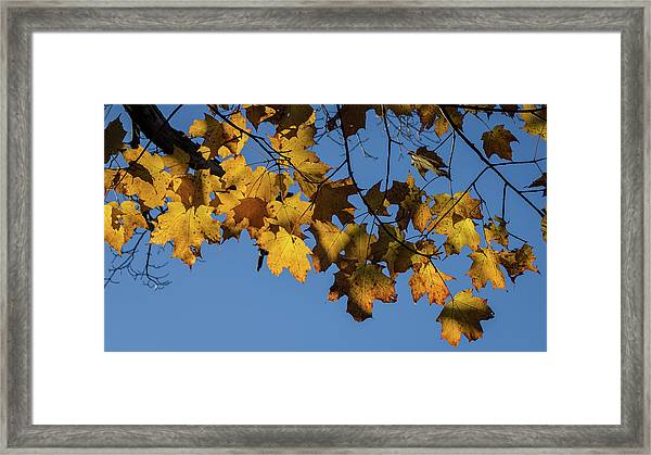 Just Leaves Framed Print