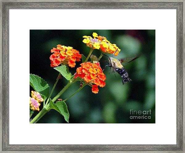 Just Like A Hummingbird Framed Print