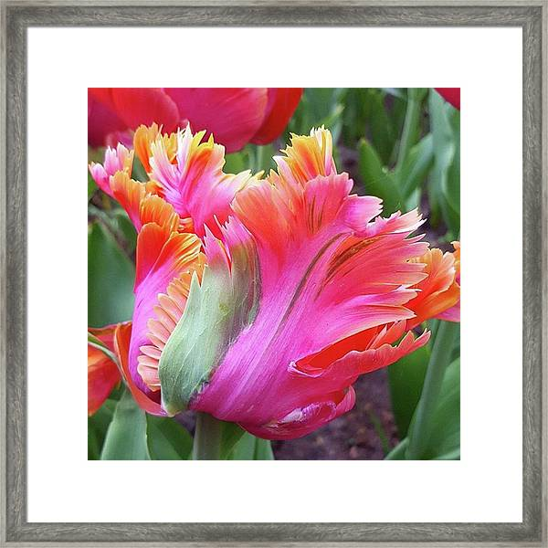 Just The Most Amazing Flower Framed Print by Dante Harker