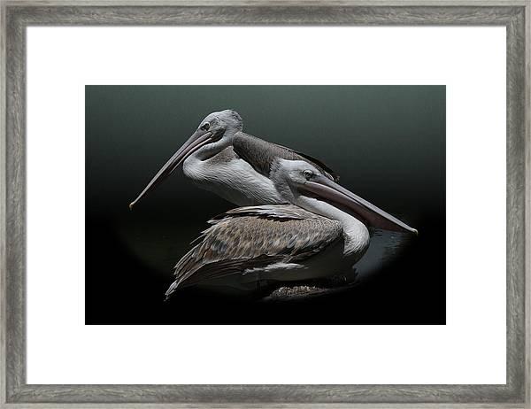 Juxtaposition - Pelicans Framed Print