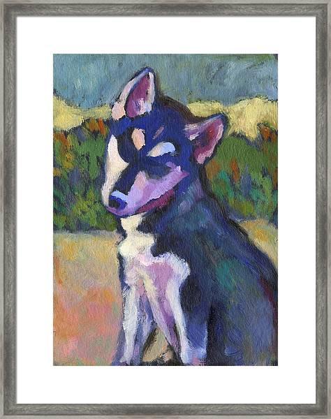 Kaila Puppy Framed Print