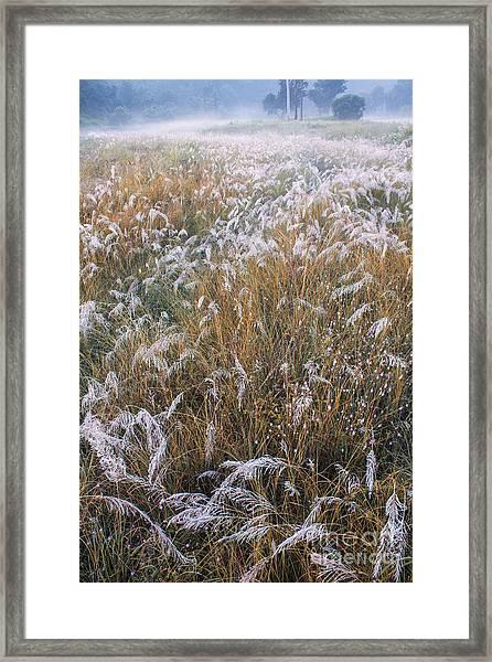 Kans Grass In Mist Framed Print