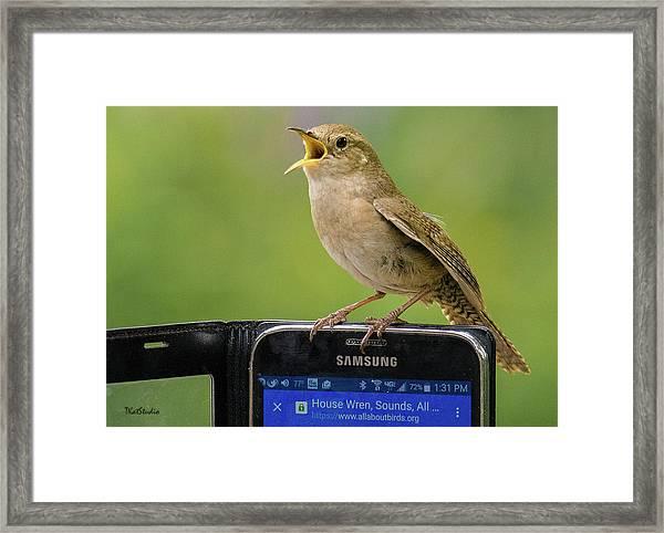 Karaoke Wren Framed Print
