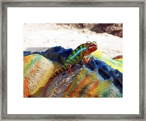 Karma Kameleon  Framed Print