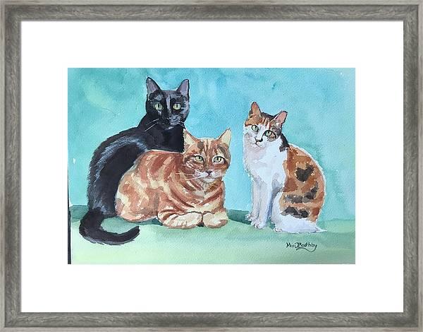 Kates's Cats Framed Print