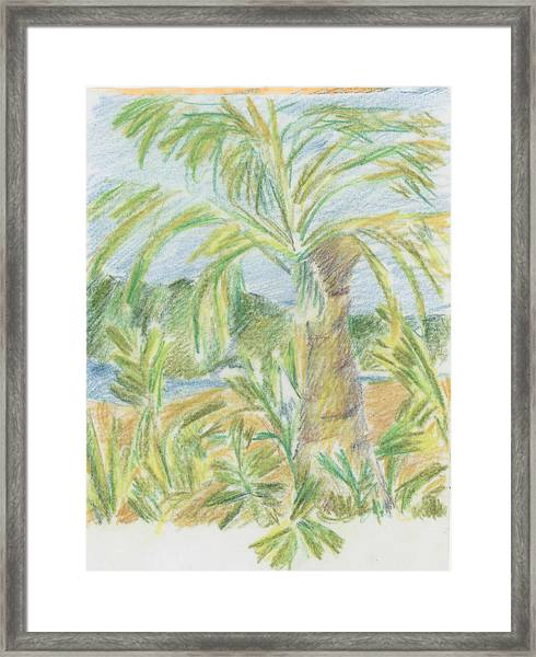 Kauai Palms Framed Print