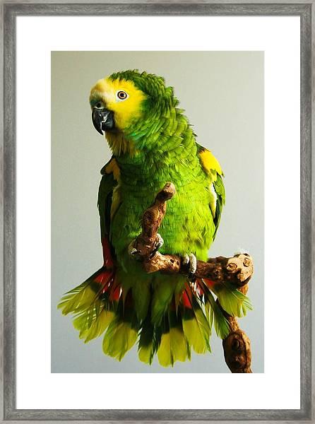 KC Framed Print