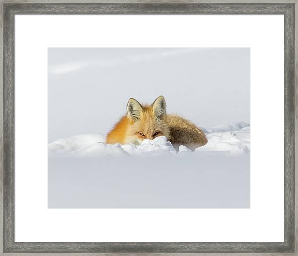 Snow Hide Framed Print