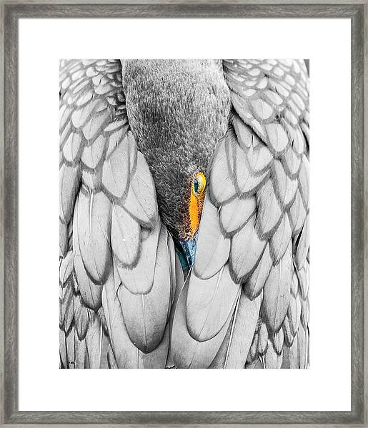 Keeping Warm. Framed Print
