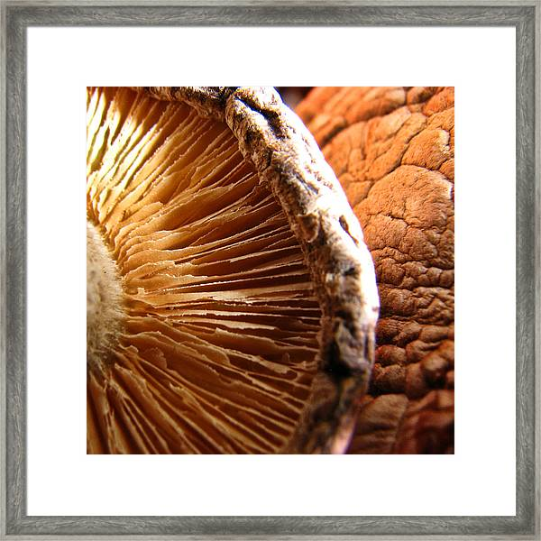 Kept In A Cool Dark Place Framed Print