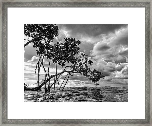 Key Largo Mangroves Framed Print