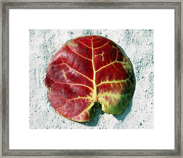 Framed Print featuring the photograph Key West Leaf In The Sand by Bob Slitzan