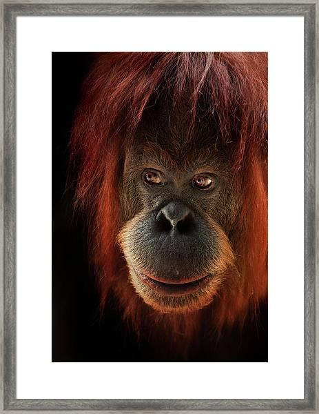 Kiani Framed Print