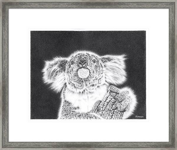 King Koala Framed Print