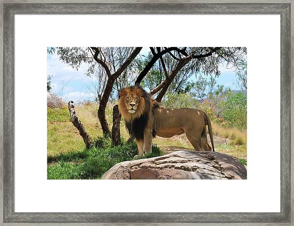King Of His Domain Framed Print