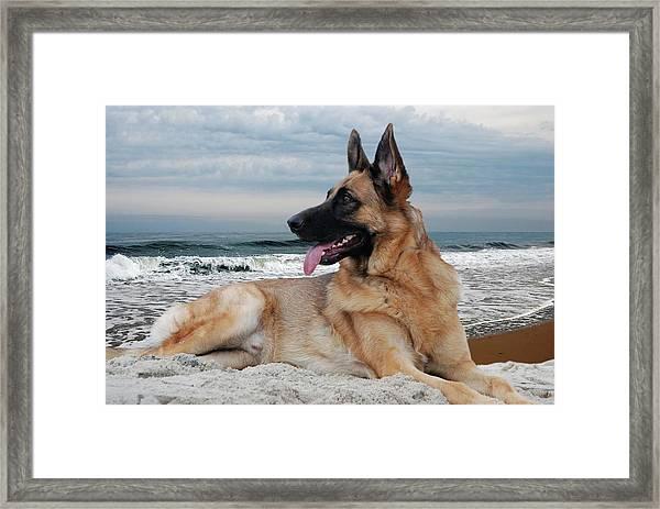 King Of The Beach - German Shepherd Dog Framed Print