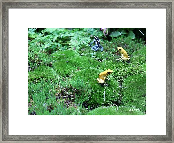 King Of The Mound Framed Print