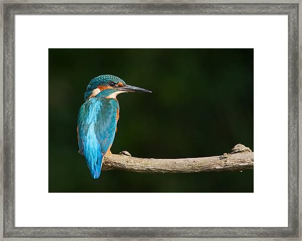 King Of The River Framed Print