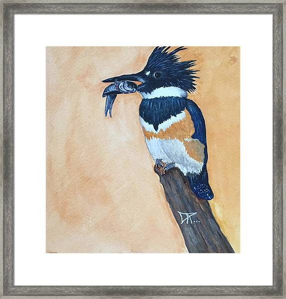 Kingfisher-2 Framed Print