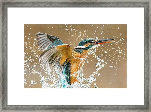 Kingfisher Eruption Framed Print
