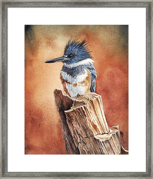 Kingfisher I Framed Print