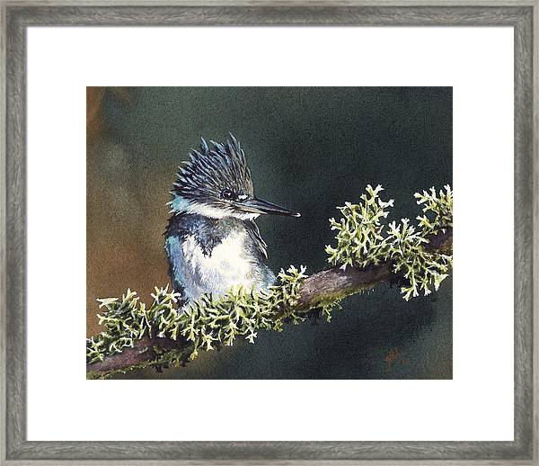 Kingfisher II Framed Print