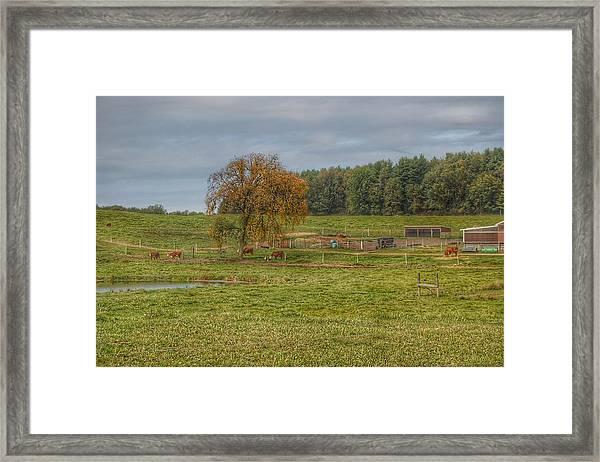1002 - Kingston Road Cows Framed Print