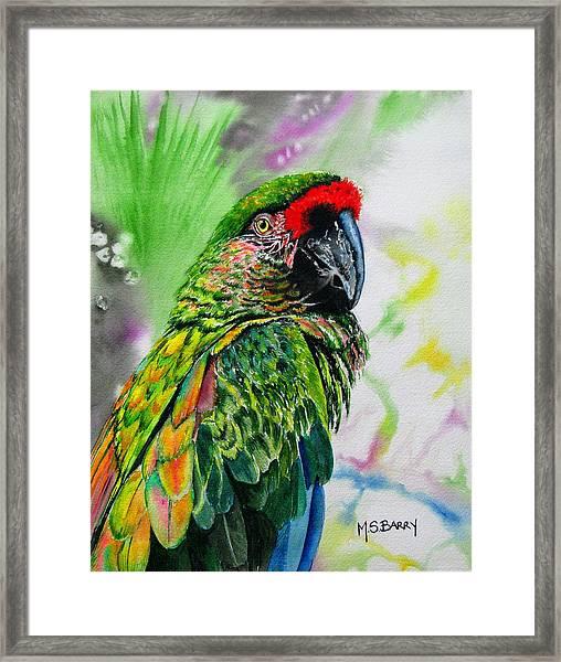 Kiowa Framed Print