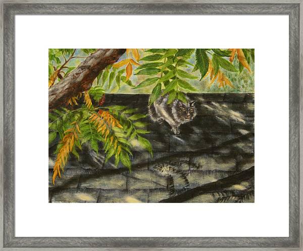 Kirby Stalking Framed Print by Karen Peterson