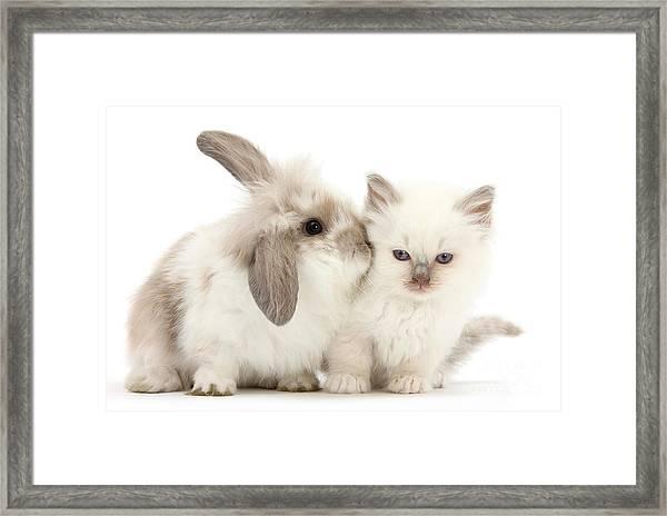 Kiss Her Fluffy Cheek Framed Print