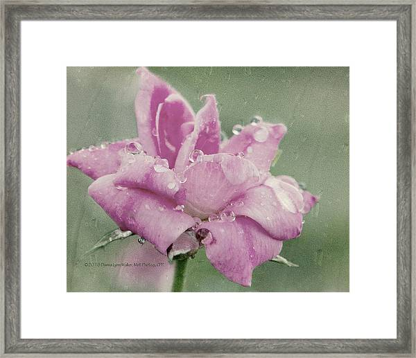 Kissed By The Rain Framed Print