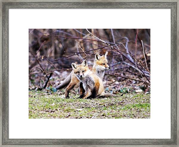 Kits 2014 Framed Print