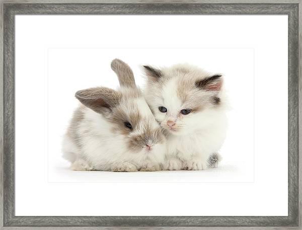 Kitten Cute Framed Print