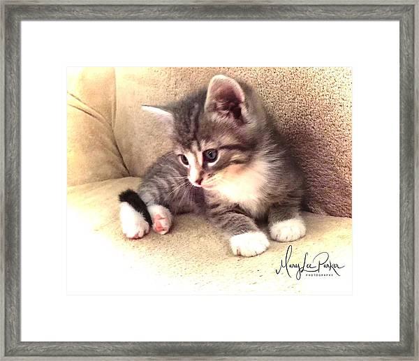 Kitten Deep In Thought Framed Print