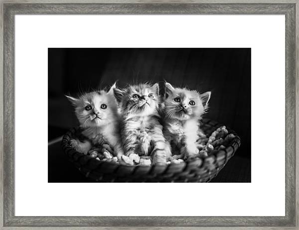 Kitten Trio Framed Print