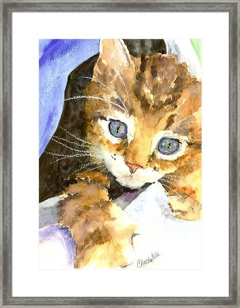 Kitten In Blue Framed Print