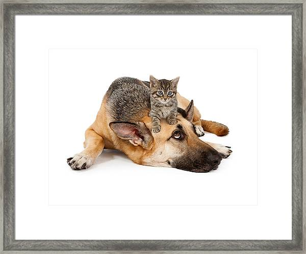 Kitten Laying On German Shepherd Framed Print