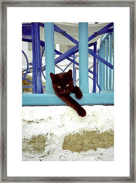 Kitten With Blue Rail Framed Print