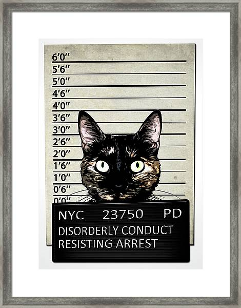 Kitty Mugshot Framed Print