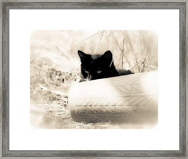 Kitty Stalks In Sepia Framed Print