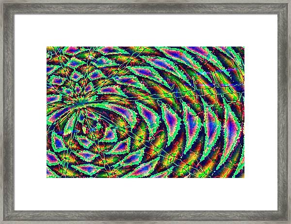 Kiwi Framed Print