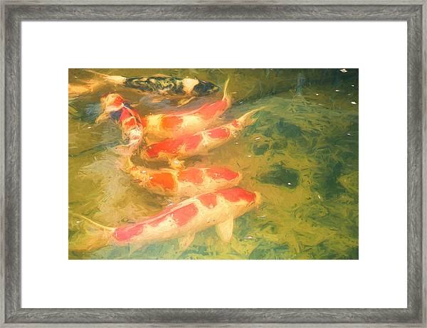 Koi 5 Framed Print