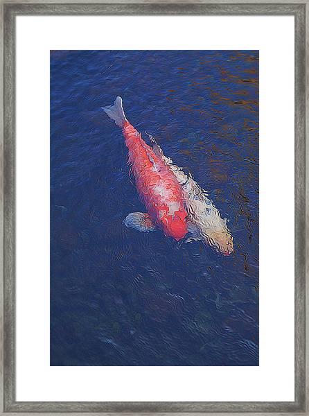 Koi Fish Partners Framed Print